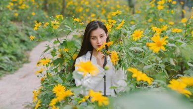 Photo of Checkin Ba Vì mùa hoa dã quỳ