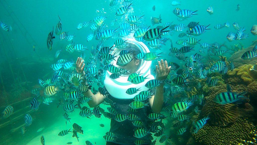 Lặn ngắm san Hô tại Phú Quốc